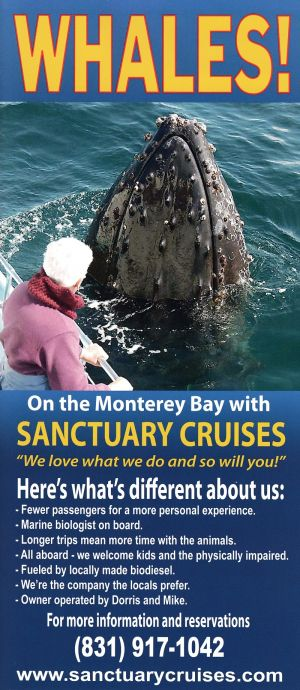 Sanctuary Cruises Whale Watch brochure full size
