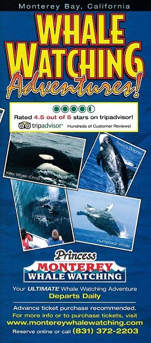 Princess Whale Watch Adventures brochure thumbnail